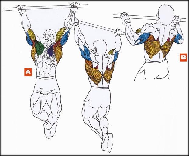 BodyZOOM - Бодибилдинг и фитнес портал: Упражнения, Мотивация, Прогресс - Подтягивания на перекладине.